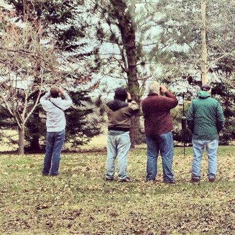 Bunting Hunting