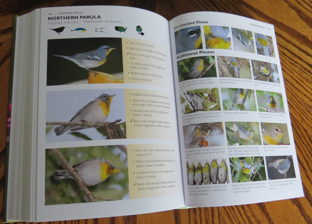 Northern Parula Section - The Warbler Guide