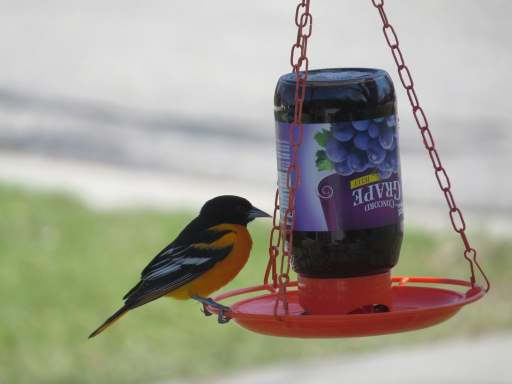 how to get birds to notice new feeder