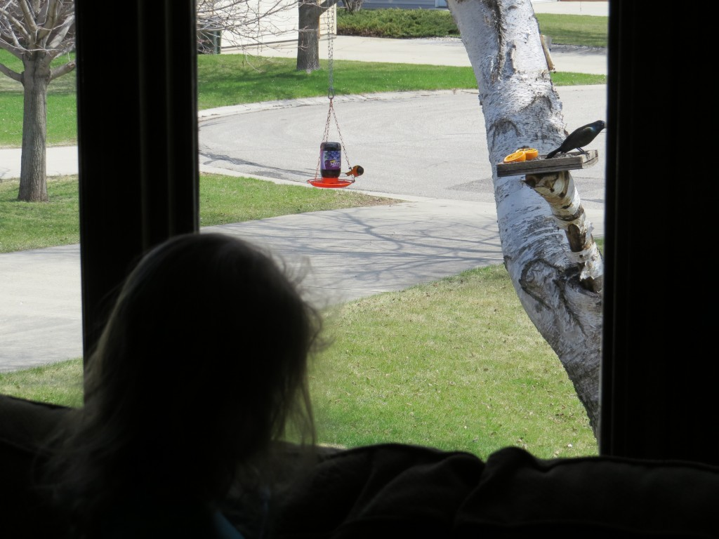 Watching feeder birds is fun for the whole family.