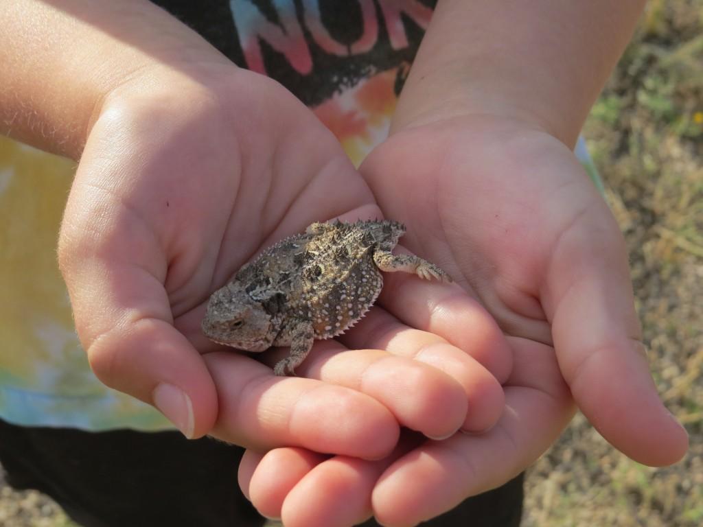 Evan lizard