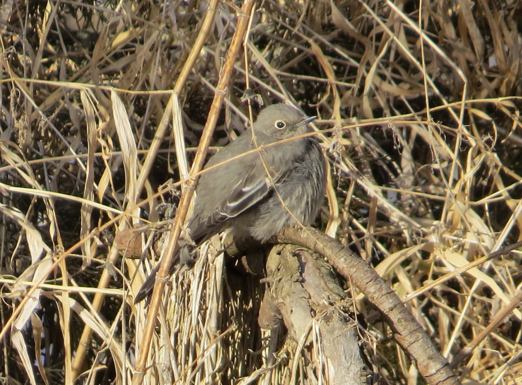 Townsend Solitaire