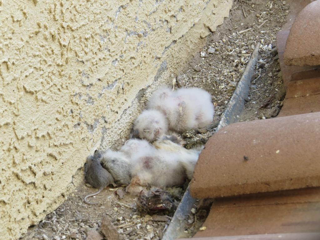 GHOW nest