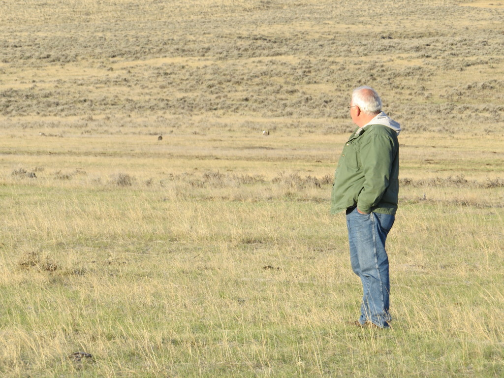 Dad Sage-Grouse