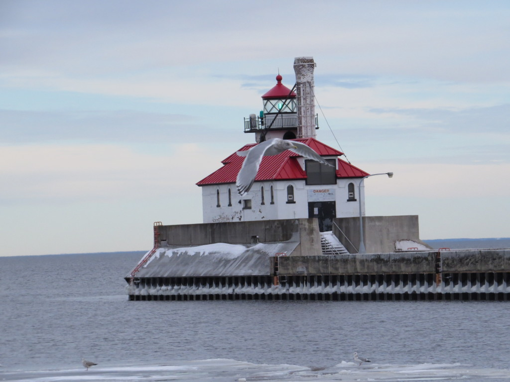 Thayer's Gull lighthouse