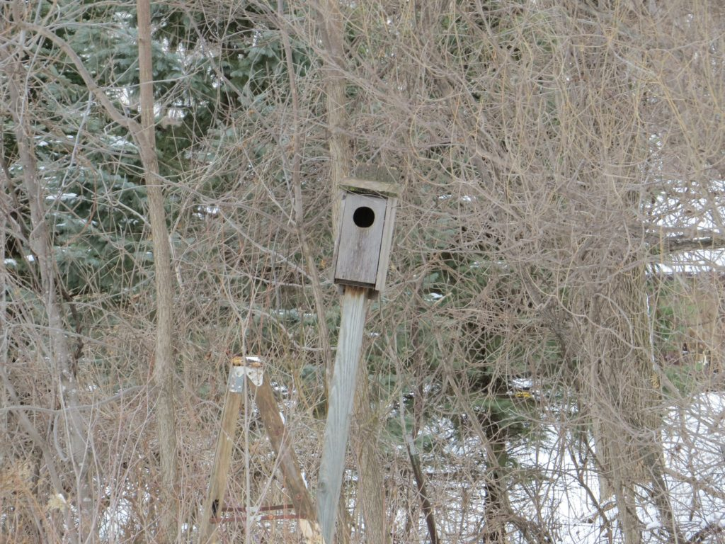 Wood Duck box
