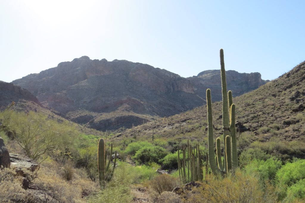 Alamo Canyon, Organ Pipe National Monument